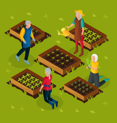 Isometric pensioners working in garden template vector