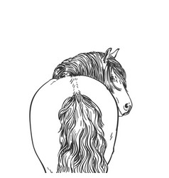 Portrait horse with long mane looks back view vector