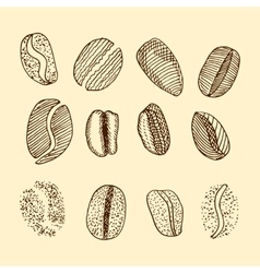 sketch of coffee beans drawing vector image