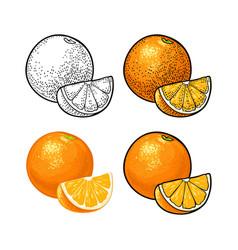 whole and slice orange color vintage vector image