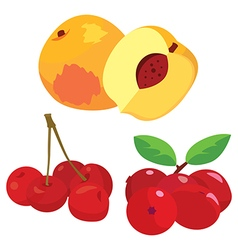 fruits2 vector image vector image