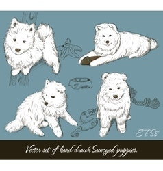 Vintage set with samoyed puppies vector image