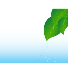 Water splash and leaves vector image
