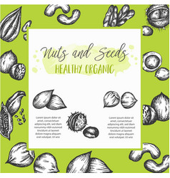 Nuts and seeds background collection hand drawn vector