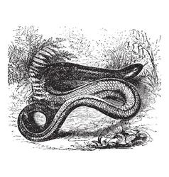 Slow Worm Vintage engraving vector