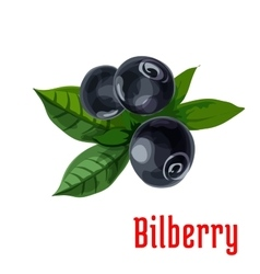 Blue bilberry fruit with green leaves cartoon icon vector image