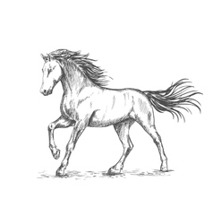 White horse with stamping sketch portrait vector