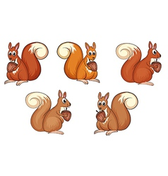 Squirrel eating vector image vector image