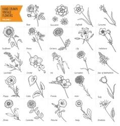 Hand drawn vintage flowers set Pen graphic floral vector image vector image