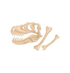 skull and bones of tyrannosaurus rex ancient vector image vector image