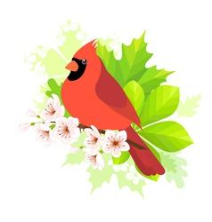 Spring cardinal vector image vector image