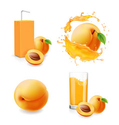 apricot juice collection in splash vector image