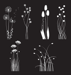 blooming wild flowers separated on black vector image