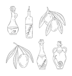 branch olive tree with olives and bottle of oil vector image