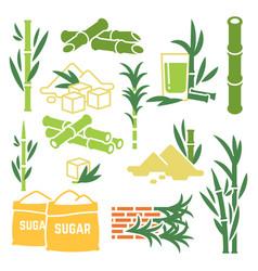 Sugar cane sugarcane plant harvest icons vector
