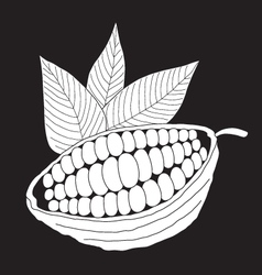 The cacao pod on a black background vector image