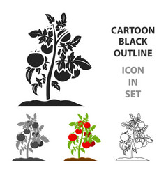 tomato icon cartoon single plant icon from the vector image