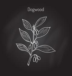 Branch of dogwood pla vector