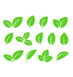 Hand drawn abstract mint leaves set icons vector