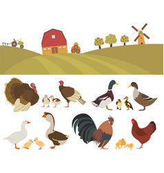 poultry farming chicken turkey duck goose family vector image