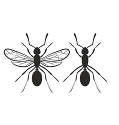Silhouettes of ants vector