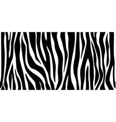 skin zebra seamless pattern vector image