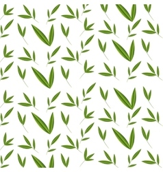 bamboo natural plant isolated vector image