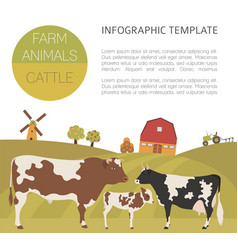 Cattle farming infographic template cow bull calf vector