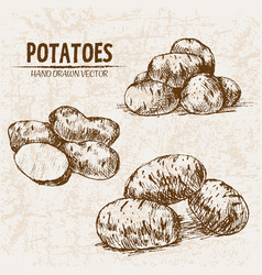 Digital detailed line art potato vector