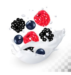 Raspberry and blueberry and blackberry in a milk vector