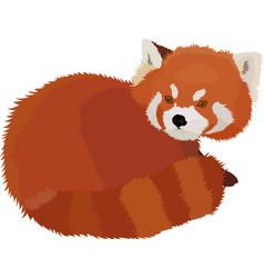 red panda cartoon style vector image