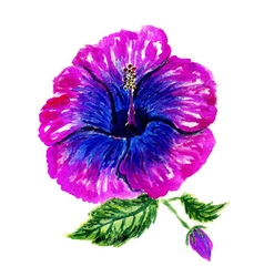 Painted Hibiscus4 vector