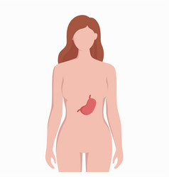 Stomach on woman body silhouette medical vector