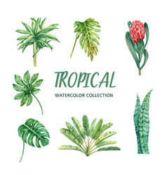 Element watercolor design with tropical plant vector