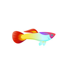 multicolored marine fish isolated on white poster vector image