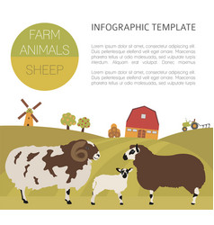 Sheep farming infographic template ram ewe lamb vector