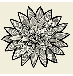 Hand drawn sketch flower vector image