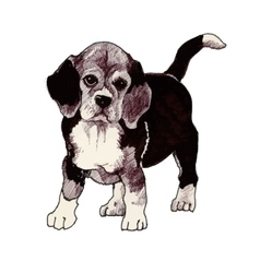 sketched hound Puppy dog hand drawn vector image vector image