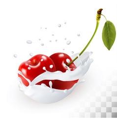 Couple of cherries in a milk splash on a vector