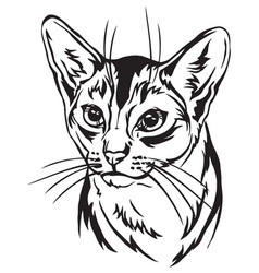 Decorative portrait abyssinian cat vector