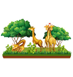 Group giraffe in nature vector