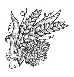 hops and barley sketch engraving vector image