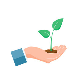 plant grown in hand green sprout grow up in palm vector image