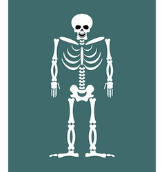 Skeleton on white background Skull and Bones Dead vector image