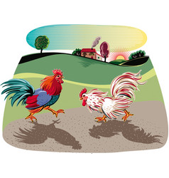 Two cocks facing each other in a fight vector