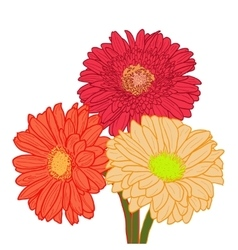 Bouquet of three colorful gerberas Hand drawn vector image