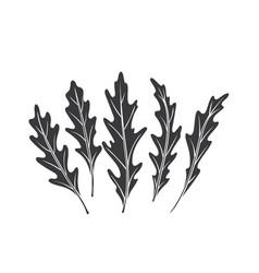 Arugula glyph icon vector