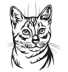Decorative portrait of egyptian mau cat vector
