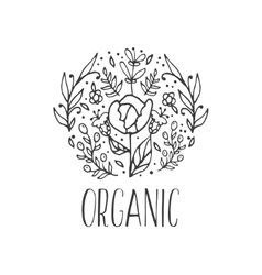 floral decorative background Organic herbs vector image
