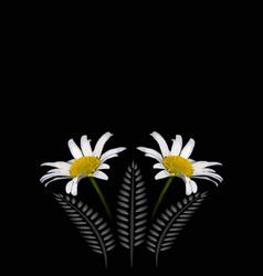Frame frak chamomile flowers on a black vector